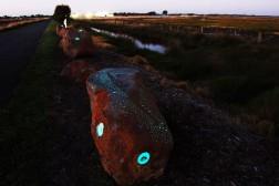 Charged Landscape- Emu detail
